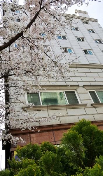전경 - 봄